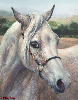 Old Gray Mare  http://ritatate.com/