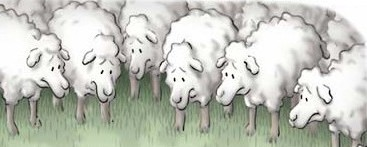 Flock of gentle sheep